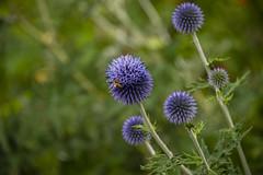 20190811_AugustMix2019_1832 (ShakeyDave) Tags: d750 nikon park golden acre leeds city flowers colour summer 2019 august david stevens west yorkshire