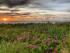 (skepvzrq47) Tags: beach nature sunrise southernliving saltlife seaside