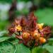 Wild Berries Growing