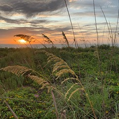 (skepvzrq47) Tags: beach nature sunrise seaside southernliving saltlife seaoats