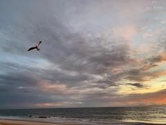 (skepvzrq47) Tags: beach seaside seagull shoreline southernliving saltlife nature