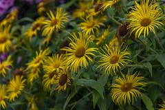 20190811_AugustMix2019_1900 (ShakeyDave) Tags: d750 nikon park golden acre leeds city flowers colour summer 2019 august david stevens west yorkshire
