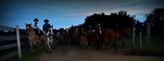Caindo a noite (Eduardo Amorim) Tags: cavalos caballos horses chevaux cavalli pferde caballo horse cheval cavallo pferd crioulo criollo crioulos criollos cavalocrioulo cavaloscrioulos caballocriollo caballoscriollos pampa campanha fronteira bagé riograndedosul brésil brasil sudamérica südamerika suramérica américadosul southamerica amériquedusud americameridionale américadelsur americadelsud cavalo 馬 حصان 马 лошадь ঘোড়া 말 סוס ม้า häst hest hevonen άλογο brazil eduardoamorim