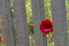 20190811_AugustMix2019_1904 (ShakeyDave) Tags: d750 nikon park golden acre leeds city flowers colour summer 2019 august david stevens west yorkshire