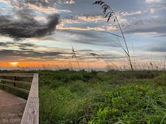(skepvzrq47) Tags: saltlife southernliving seaside nature sunrise beach boardwalk