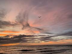 (skepvzrq47) Tags: nature sunrise seaside seagull southernliving saltlife ocean beach