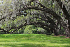 Magnolia Plantation and Gardens - Charleston, South Carolina (russ david) Tags: magnolia plantation gardens charleston south carolina sc landscape travel april 2019 trees spanish moss