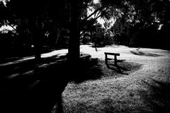 Park Bench (Indigo Skies Photography) Tags: sigmadp1quattro foveonmagic foveon foveonx3directimagesensorcmos quattro blackandwhite park garden parkbench sunlight sun light afternoon dof shadows shadow trees folage leaves winter august afternoonsun
