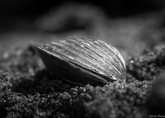 Closed Like a Clam (Patches Photo) Tags: macromondays closed macro clam monochromatic blackandwhite vignetting black white mollusk