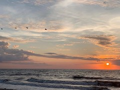 (skepvzrq47) Tags: sunrise southernliving saltlife seaside ocean nature beach pelicans