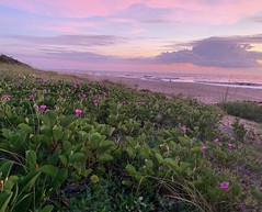 (skepvzrq47) Tags: southernliving saltlife beach ocean seaside sunrise nature
