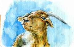 Goat Yoga (Life Imitates Doodles) Tags: goat animal watercolor postcardsforthelunchbag