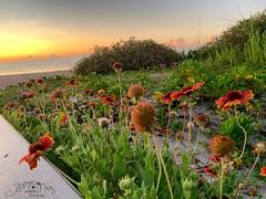 (skepvzrq47) Tags: southernliving saltlife seaside ocean boardwalk beach nature