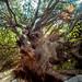 The stranger tree