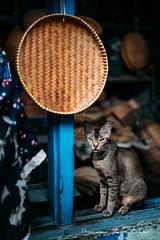 PPH08733 (PPH & Photography) Tags: laupasat tangerang pasarlama pasar market traditional wet
