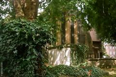 St Mary's (Carrot Room) Tags: ultron20 analoguephotography prominent church voigtlander reading rangefinder berkshire 35mmfilm graveyard film kodakportra400 filmcamera