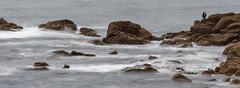 Man and the sea (Jean-Luc Peluchon) Tags: fz1000 ocean mer sea vague rivage sauvage nature wave shore wild manche atlantique longexposure panoramic panoramique panorama rocher stone rock breizh bretagne bzh celtic cliff