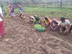 Livelihood Promotion (at-grassroots) Tags: agriculture atg india livelihoodpromotion