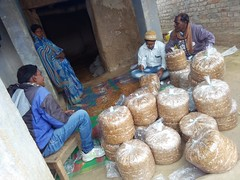 Mushroom Cultivation - Livelihood Promotion