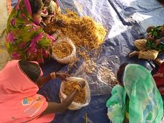 Mushroom Cultivation - Livelihood Promotion