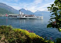 Lake side garden (Diepflingerbahn) Tags: raddampfer raddampferuri paddlesteameruri weggis kantonluzern lakelucerne vierwaldstaettersee schweiz suisse svizzera switzerland panasoniclumixdmctz80 geotagged uri