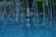 DSC_0223_001 (Medelwr) Tags: nature japan 自然 日本 水 water summer 夏 blue 青 木 tree mirror リフレクション