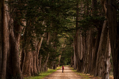 Tree Tunnel (Jaykhuang) Tags: tree treetunnel bayarea cypress countryroad northbay jayhuangphotography morning softlight selfie