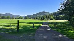 Sortie vélo en fond de vallée (mrieffly) Tags: sortievélo valléedelathur kruth pistecyclable htrhin alsace vosges