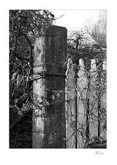 Corner Post (radspix) Tags: yashica fr1 4275 ml f3545 arista edu ultra 200 pmk pyro