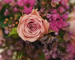 flower show-8171314 (E.........'s Diary) Tags: eddie ross newburgh fife scotland olympus omd em5 mark ii aug 2eddierossnewburghfifescotlandolympusomdem5markiiaug2019newburghflowershow