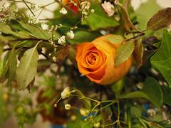 flower show-8171313 (E.........'s Diary) Tags: eddie ross newburgh fife scotland olympus omd em5 mark ii aug 2eddierossnewburghfifescotlandolympusomdem5markiiaug2019newburghflowershow