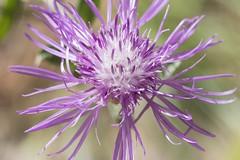 Fleur (mr.j38160) Tags: macro fleur 70300