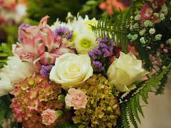 flower show-8171309 (E.........'s Diary) Tags: eddie ross newburgh fife scotland olympus omd em5 mark ii aug 2eddierossnewburghfifescotlandolympusomdem5markiiaug2019newburghflowershow