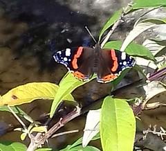 Vlinder (~~Nelly~~) Tags: mechelen planckendael vlinder papillon butterfly