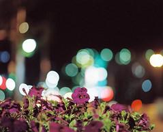 2324/1820:z (june1777) Tags: snap street seoul night light bokeh mamiya rz 67 z 110mm f28 kodak portra 800