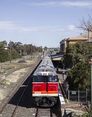 """""""North West Zephyr"""". 42103, on, 9L41, arrives at Werris Creek 17th August, 2019, Main North, NSW. (garratt3) Tags: 42103 421class australia aus diesel dieselloco dieselpassenger dieselpower dieseltrain digital locomotive newsouthwales newsouthwalesheritage pentax mainnorth rail railway srs standardgauge sydneyrailservices train trains"""