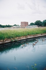 (geese don't) go sailing in london (auqanaj) Tags: london nature architecture sailing reservoir hackney film analog noducks geese goose