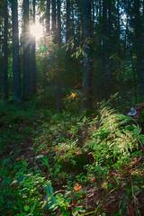 Луч света\Sunray (a.l.bsk) Tags: landscape autumn autumnlandscapre karelia autumnkarelia autumnlarelia travel пейзаж карелия осень осеннийлес лес