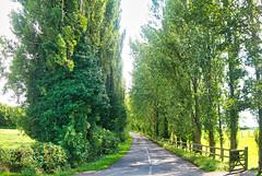 Memorial Trees (nigel@hornchurch) Tags: flickr p1020948 burton joyce nottinghamshire