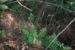 Living on the edge (しまむー) Tags: pentax k30 da 35mm f28 macro limited natural ナチュラル 東北大学 植物園 tohoku university botanical garden 青葉山