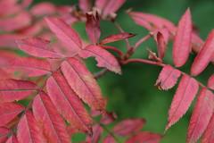 Still in summer, though (しまむー) Tags: pentax k30 da 35mm f28 macro limited natural ナチュラル 東北大学 植物園 tohoku university botanical garden 青葉山