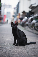 猫 (fumi*23) Tags: ilce7rm3 sony sel55f18z 55mm sonnartfe55mmf18za a7r3 animal alley cat gato chat neko emount feline bokeh depthoffield dof ねこ 猫 ソニー