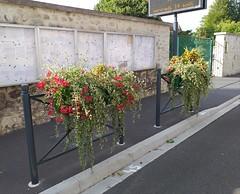 fleurs-03