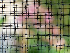 Anglų lietuvių žodynas. Žodis gardener reiškia n sodininkas lietuviškai.