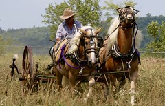 Horse power (stephencharlesjames) Tags: horsepoweragriculturefarmingequipment work field addison county fair