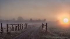 19082019-DSC_0004 (vidjanma) Tags: houffalize barrières brume chemin matin
