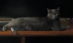 Cats of summer (JulieJB18) Tags: cat lounging inside sun
