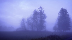 Foggy Blue Morning (Eclectic Jack) Tags: sunrise before blue fog mist cool december rural road country tree field sky soft focus weather america state washington colorful landscape nature dawn early