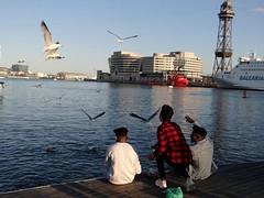 The boys and the seagulls.   Barcelona. (habanera19) Tags: blue nature water shop national bird sea street people puertodebarcelona españa seagulls cataluña astillerolife barcelona summer boys