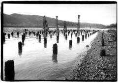 Willamette River (Robert Drozda) Tags: portland oregon willametteriver bnsfrailwaybridge51 liftbridge amtrak river pilings bw monochrome film ilfordhp5plus olympusxa2 bluemooncamera drozda